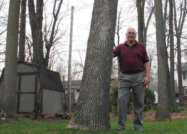 John Irvine stands among ash trees in his backyard in the Riverdale neighborhood. The Cornwall resident is concerned the city isn't doing enough to prepare for the arrival of the emerald ash borer and its potential devastation to trees. 