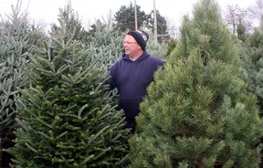 Bob Teal of Lisa Teal's Christmas Trees at the Canadian Tire Kingston Centre parking, with a couple of varieties of trees on Tuesday. (Ian MacAlpine/The Whig-Standard)