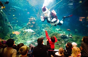 Kids line up to see Scuba Santa at Vancouver Aquarium in Vancouver, British Columbia. Institutions such as zoos and wilderness sanctuaries also encourage seasonal giving. For instance, the Vancouver Aquarium has the Adopt-A-Killer Whale-program. (CARMINE MARINELLI/QMI AGENCY)