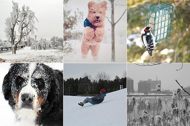 Some of the winter photos submitted by Sun Media readers.