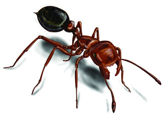 Internet image