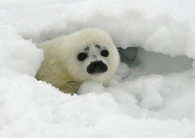 QMI wire service