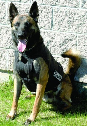 Trax, Brockville's canine cop, is retiring later this year.
