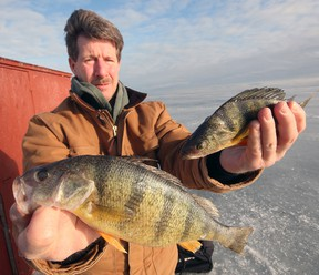 Bill McKie shows off a pair of nice jumbo perch reeled in Friday afternoon inside hut #20. Jeff Tribe/Tillsonburg News