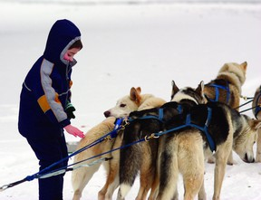 Winterfest saw a new addition this year, with dog-sled rides offered to locals. Photo by Aaron Taylor/Fort Saskatchewan Record/QMI Agency