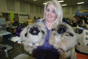 Cynthia Dyson, with her five-month-old Pekingese Mattie, right, and six-month-old Lucy. The two dogs competed in the Woodstock and District Canine Association 's dog show on Friday. Lucy is descended from the famous Malachy, who won the best in show title last year at the WEstminister Kennel Club Show. Over 800 dogs were scheduled to take part in the competition that took place over the weekend at the Oxford Auditorium. HEATHER RIVERS/WOODSTOCK SENTINEL-REVIEW