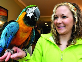 Gobbler, a macaw parrot, sits on the hand of Mary Brown in her Brockville apartment on Wednesday. Gobbler's calls - broadcast through an open intercom and into the street - were mistaken for calls of distress and brought the city police charging onto the scene. (DARCY CHEEK/The Recorder and Times)