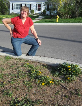 Simcoe homeowner Christine Fair is upset after Norfolk County Council backtracked on  earlier approval to re-sod sections of her property on Groff Street.  (MONTE SONNENBERG Simcoe Reformer)