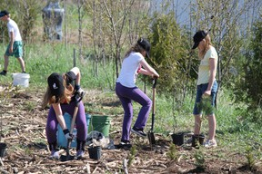 Glen Morris Public School students plant trees with Dufferin Aggregates in an area the company won't excavate near the future site of a gravel pit in the north of Paris off West River Road. (MICHAEL PEELING, QMI Agency)