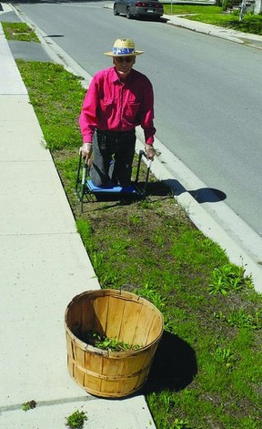 David Webster, a resident of Brock St., says weeds along the street are flourishing in the warm sunshine. Residents are blaming a town sub-contractor on shoddy work in replanting grass on the town-owned strip between the sidewalk and street following the replacement of a water main in 2011.        Wayne Lowrie-Gananoque Reporter