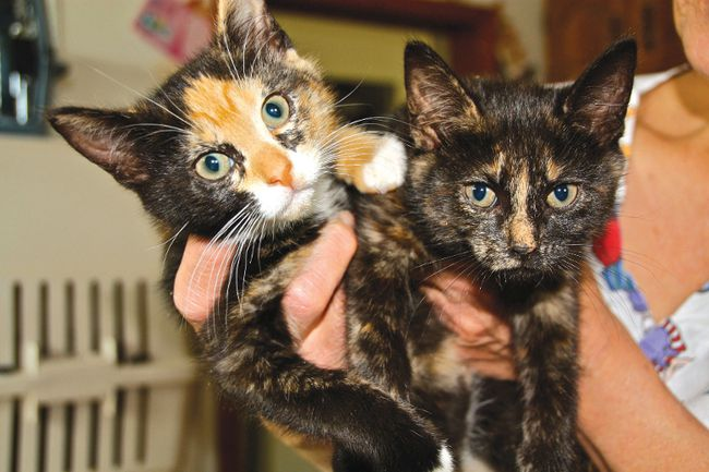 Two eight-week old kittens that were found in downtown Kenora are now available at the Cat Shelter.