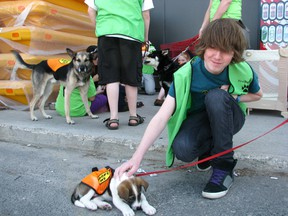 It's a Dog's Life canine fostering network volunteer Chase Wilson with Beagle cross pup Yoda during the Meet the Hounds event at Canadian Tire, Saturday June 8. REG CLAYTON/Miner and News