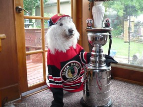 Bella, George and Irene Luzanski's 8-year-old Golden Doodle, sports a Chicago Blackhawks jersey and hat in support of the team, which is headed for game two of the Stanley Cup finals against the Boston Bruins on Saturday night.  (Submitted photo)