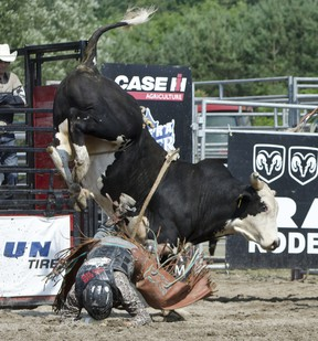 Photos from the weekend's rodeo events at the Warkworth Western Weekend.  Linda Horn for Community Press
