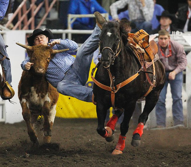 Zane Hankel wrestles a steer during the Canadian Finals Rodeo at Rexall Place in Edmonton, Alberta on Thursday, November 8, 2012. (PERRY NELSON/QMI Agency)