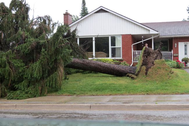 A tree in front of a Wiarton home was brought down by Friday's storm. QMI photo.