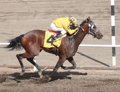 Omission hits the finish line to win the Triple K Oilfield Services Grande Prairie Derby Sunday.