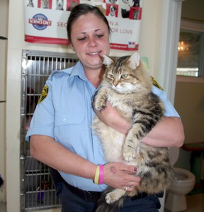 Lisa Surcon, an animal control officer in Timmins,, holds one of the many cats currently residing at the Timmins and District Humane Society. A discussion about Timmins' growing problem with stray cats and the number of felines allowed per household was spurred by a special request made to city council this week.