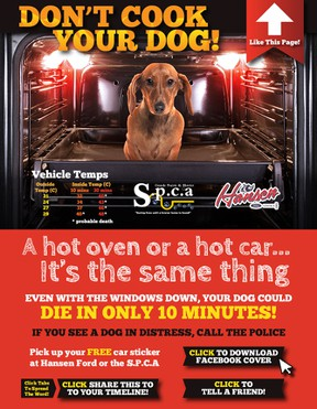 These car decals are available for free from either the SPCA or Hansen Ford. (Supplied)