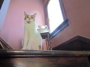 Indoor cats can be the kings and queens of their castles, much like Montgomery, pictured here surveying his kingdom.