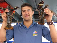Guide Remi Gaudet of Shediac Bay Cruises holds up two lobsters after placing elastic bands over their claws to prevent them from fighting. DIANE SLAWYCH PHOTO
