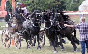 The 5th Annual Friesian Weekend featured a horse show Saturday at the Tillsonburg fairgrounds, Friesian horses and their human handlers competing in Ringsteken and pylon course events, as pictured here. The weekend is a celebration of things Friesian, largely shared by immigrants from Friesland, a province in The Netherlands. Jeff Tribe/Tillsonburg News