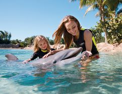Family fun at Discovery Cove Orlando includes dolphin interactions. DISCOVERY COVE PHOTO