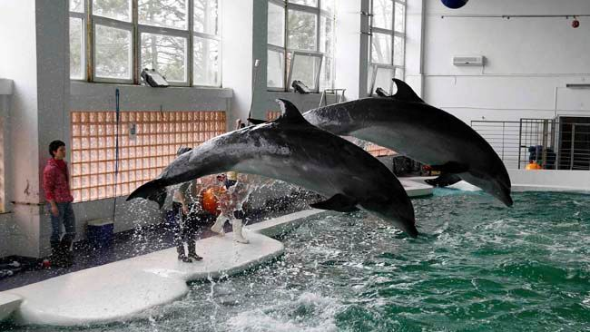 Dolphins jump in their pool at the Dolphinarium in the Black Sea coast town of Constanta, 226 km east of Bucharest February 14, 2014.  REUTERS/Bogdan Cristel