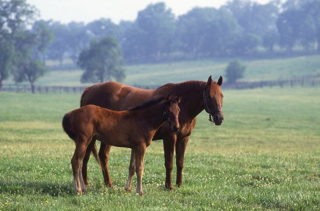 Horses in a field at the Kentucky Horse Park in Lexington. KENTUCKY DEPARTMENT OF TRAVEL AND TOURISM PHOTO