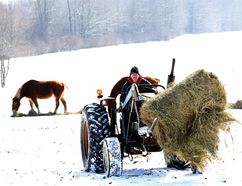 Lawrence Kelly hauls a partial round bale of hay after laying out feed for his Belgian horses east of Brockville Wednesday morning. Kelly estimates he has used about a third more feed this winter than in the recent past for his 80 head of horses and cattle.