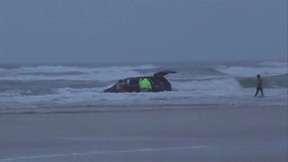In this still image captured from video, rescuers pull three children from a minivan tossing in the surf at Dayton Beach, Florida March 4, 2014 after their mother drove them into the Atlantic Ocean, according to the Volusia County Sheriff's Office. The children were unhurt. Video taken March 4, 2014. (REUTERS/Simon Besner)