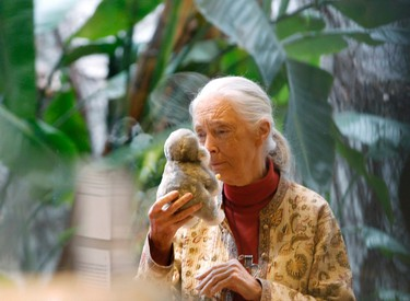 Jane Goodall, Primatologist Jane Goodall is easily one of the most famous primatologists around, and for good reason. Goodall made discoveries during her 45-year span living with apes and chimpanzees that helped us further understand the species we evolved from, in turn helping us to understand our own species better. At almost 80 years old, Goodall is far from finishing her studies and continues her research today.  REUTERS/Gustau Nacarino