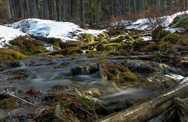Bright green moss on rocks and logs in the creek above O'Shaughnessy Falls near Nakiska, west of  Calgary, Alta., on Tuesday March 18, 2014. (Mike Drew/QMI Agency)