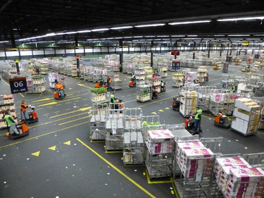 More than 70% of Europe's flowers are bought, sold and distributed through FloraHolland, the world's largest flower market in Aalsmeer. ROBIN ROBINSON/TORONTO SUN