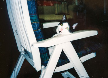 A copy photo  of Angus the cat - taken 8 year ago - before he went missing. Dalton Family/Toronto Sun/QMI Agency