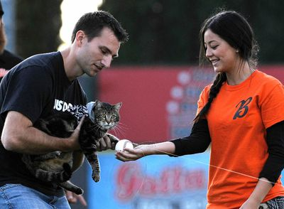 Hero cat Tara, with the help of her owner Roger Triantafilo (L) and team staff member Jade Henry, tosses the first pitch prior to the start of Bakersfield Blaze and Lancaster Jayhawks Single A baseball game in Bakersfield, California May 20, 2014. The cat saved Roger's son Jeremy Triantafilo, 4, from a dog attack in the family's driveway. REUTERS/Kevork Djansezian