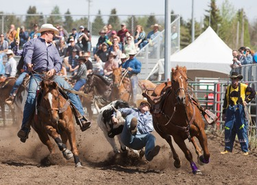 Reilly Flair makes a well timed jump onto his target during the Bulldogging event at the Rainmaker Rodeo in St.Albert, Alberta on May 24th, 2014.  CHAD STEEVES/EDMONTON SUN /QMI AGENCY