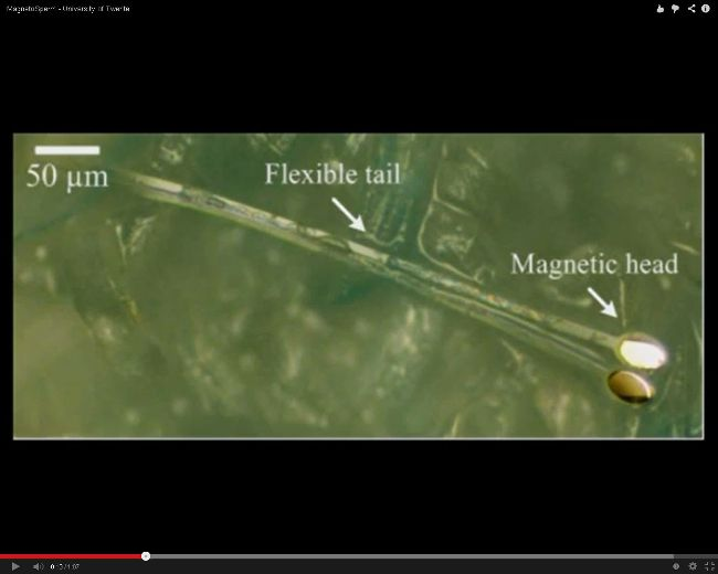 MagnetoSperm. (YouTube Screenhot)