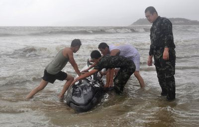 Paramilitary policemen try to help a stranded whale back into the ocean as Typhoon Rammasun hits Yangjiang, Guangdong province July 19, 2014. (REUTERS/Stringer)