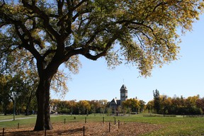 The Grandma Elm was one of Assiniboine Park's most recognizable trees. It contracted Dutch Elm Disease, though, and was taken down a couple of years ago. (ASSINIBOINE PARK CONSERVANCY PHOTO)