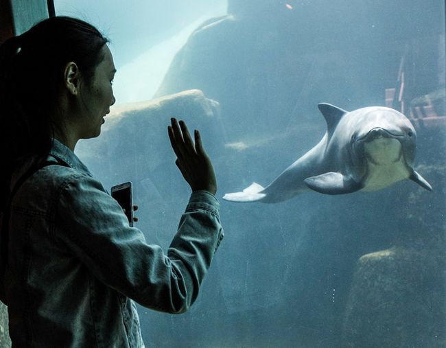 A visitor at the Vancouver Aquarium. (FILE PHOTO/QMI AGENCY)