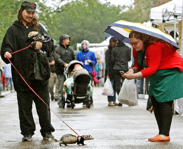 Jack the ferret has his picture taken by a passerby while at the 104 Street City Market with owner George Barnes, in Edmonton Alta., on Saturday July 26, 2014. Barnes is also holding another ferret named Widget.David Bloom/Edmonton Sun/ QMI Agency