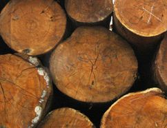 Environmentalists want to know what kind of wood will be exported to China. (REUTERS)