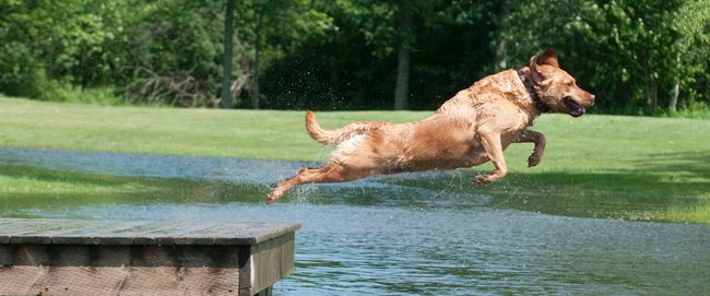 A dog jumps into the water at the Plunkett Estate in London. (Free Press file photo)