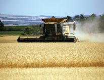 A farmer uses a CLAAS combine to harvest his crop along Highway 674 near Teepee Creek, Alta. on Friday Aug. 22, 2014. LAURA BOOTH/DAILY HERALD-TRIBUNE/QMI AGENCY