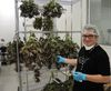 Chuck Rifici co-founded Tweed Marijuana Inc. and served as its CEO until he resigned on Aug. 27. (Jean-Francois Cloutier/QMI Agency)