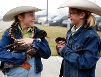 Macie Nelson, left, and her pet duck Quackers, check out some of the competition with Ella Dunsdon and her pet chicken Andy while lining up for the pet parade at Clairmont Community school on a foggy Saturday morning. The pet parade is an annual event, and a part of the Clairmont Fair. Jocelyn Turner/Daily Herald-Tribune