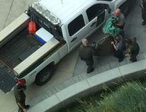 """This photo shows conservation officers moving a cougar that was shot near a hospital in Calgary. (<a href=""""https://twitter.com/CouleeHiker"""" target=""""_blank""""> Russel k/@CoolieHiker</a>/Submitted)"""