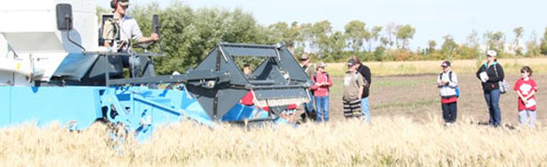A small combine was used to harvest a strip of wheat at the Burger and Fries Farm on September 18. All the ingredients to make a burger and fries meal were harvested that same day.
