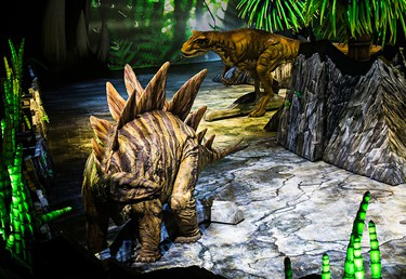 An Allosaurus, back, stalks a Stegosaurus during the opening night of Walking With Dinosaurs at Rexall Place in Edmonton, Alta., on Wednesday, Sept. 24, 2014. The show features 20 life-size dinosaurs. Codie McLachlan/Edmonton Sun/QMI Agency